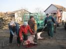 polgors_2011_disznov_56