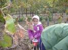csana_2010_szolo_102
